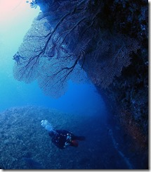okinawa diving738