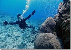 okinawa diving744