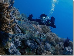 okinawa diving746