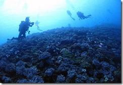 okinawa diving750