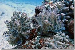 okinawa diving751