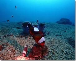okinawa diving755