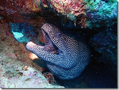 okinawa diving760