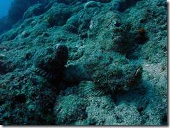 okinawa diving761