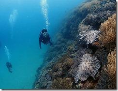 okinawa diving766