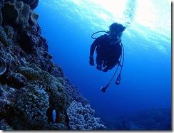okinawa diving767