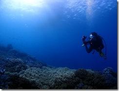 okinawa diving769