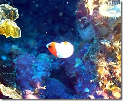 okinawa diving776
