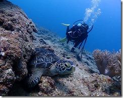 okinawa diving778