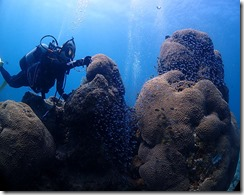 okinawa diving779