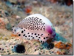 okinawa diving780