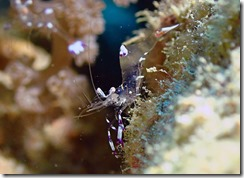 okinawa diving781