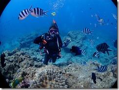 okinawa diving785
