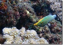 okinawa diving786
