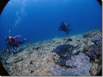 okinawa diving788