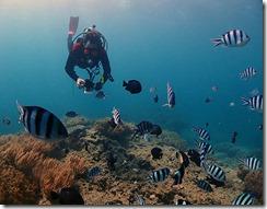 okinawa diving794