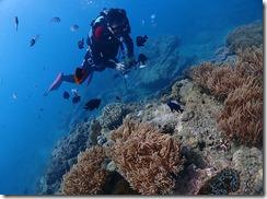 okinawa diving795