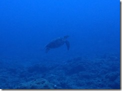 okinawa diving799