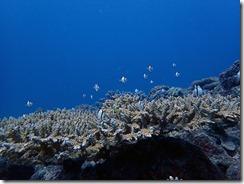 okinawa diving803