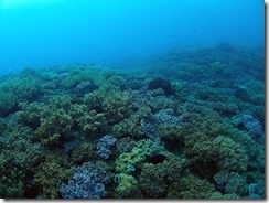 okinawa diving805