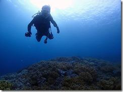 okinawa diving806