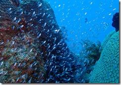 okinawa diving808