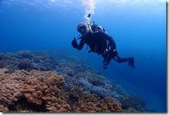 okinawa diving810