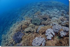 okinawa diving811