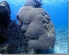 okinawa diving813