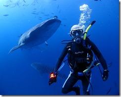 okinawa diving815