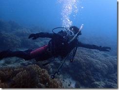 okinawa diving827