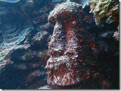 okinawa diving828