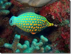 okinawa diving829