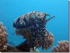 okinawa diving839