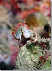 okinawa diving841
