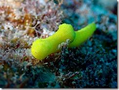 okinawa diving844