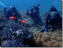 okinawa diving846