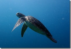okinawa diving848