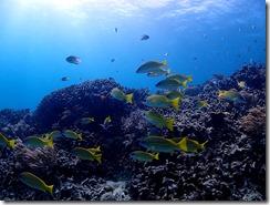 okinawa diving850