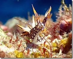 okinawa diving854