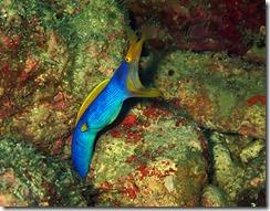 okinawa diving856