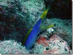 okinawa diving857