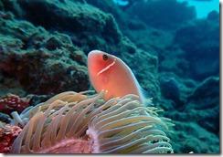 okinawa diving858