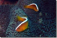 okinawa diving859