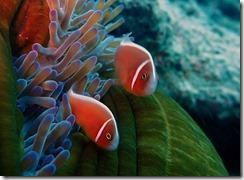 okinawa diving861