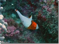 okinawa diving862