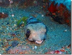 okinawa diving864