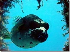 okinawa diving865