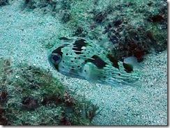 okinawa diving866