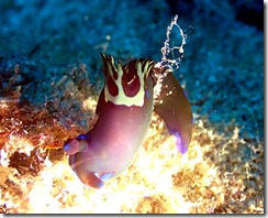 okinawa diving868